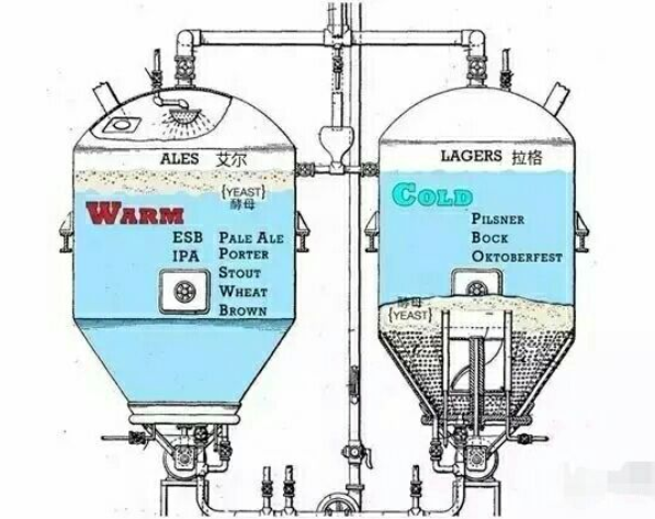 The difference between Lager and Ale brewing